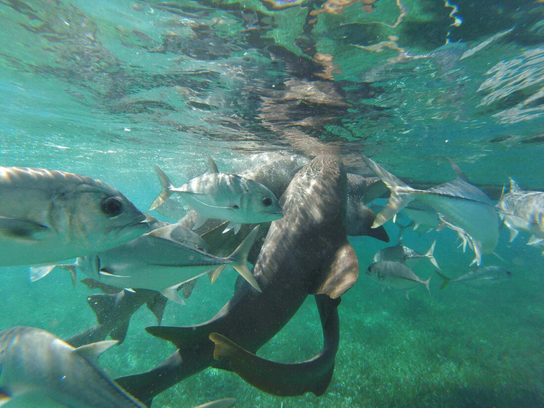 Fishing, Snorkeling & Inland Tours