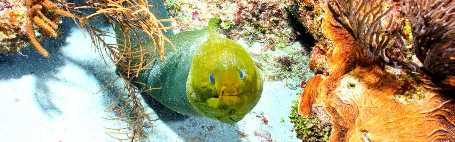 Belize snorkeling eel