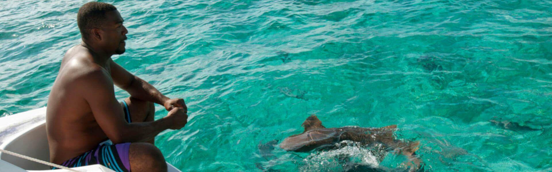 snorkeling with safe sharks in San Pedro Belize